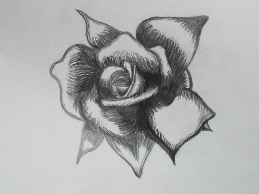 Drawn rose black and white Free More a Like Clip