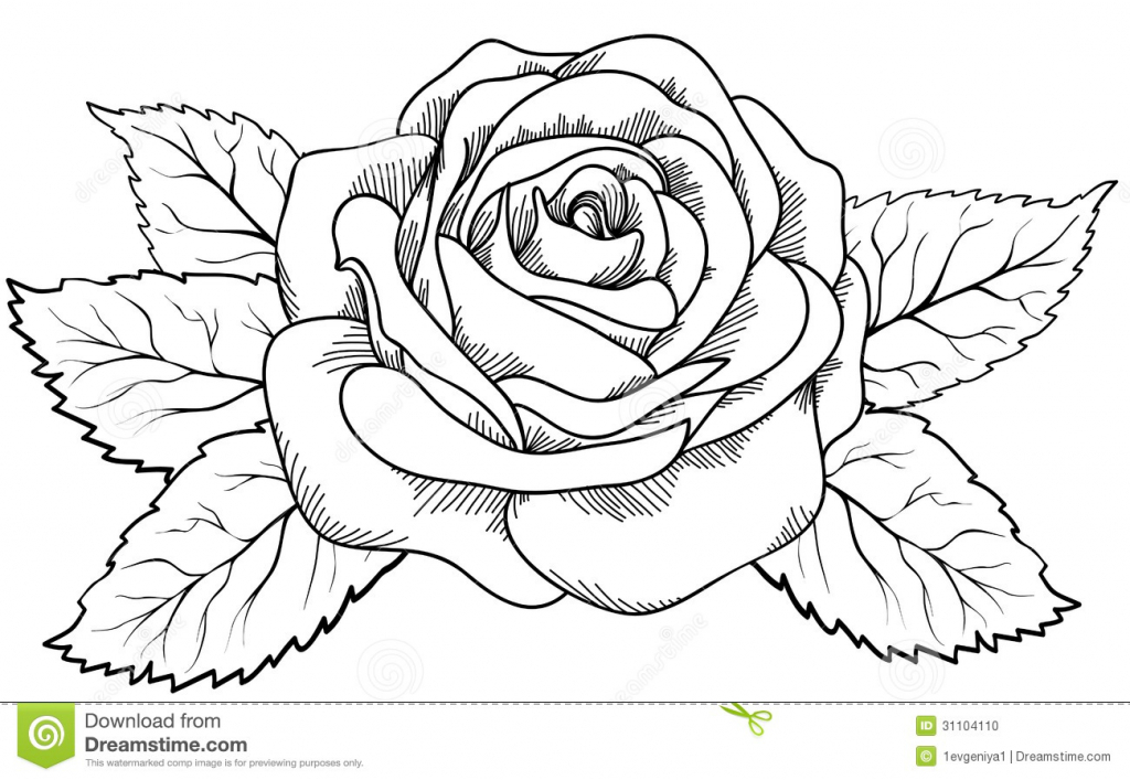 White Rose clipart sketch #10