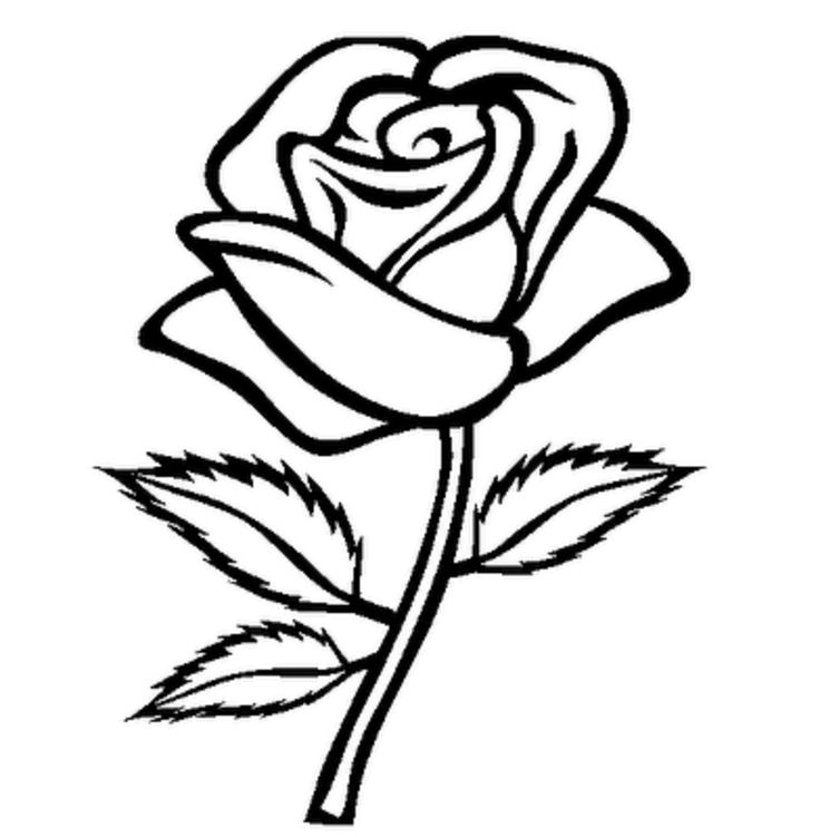 Drawn rose black and white Stem best And on Pinterest