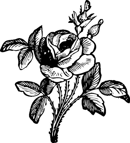White Rose clipart svg #6