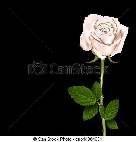 White Rose clipart whaite  37 White White