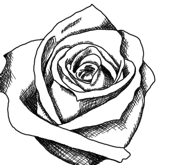White Rose clipart whaite And  And Clipart And