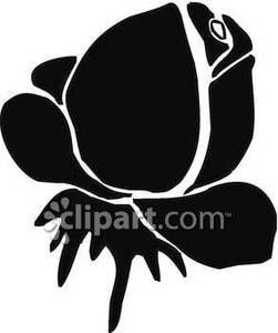 White Rose clipart whaite Clipart white clipart rose and