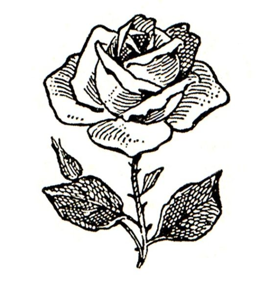 White Rose clipart whaite #1772 Black Rose  Clipart