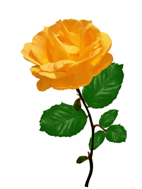 Yellow Rose clipart green rose Rose Rose leaves rose Clipart