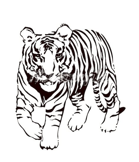 Tiiger clipart black and white #4