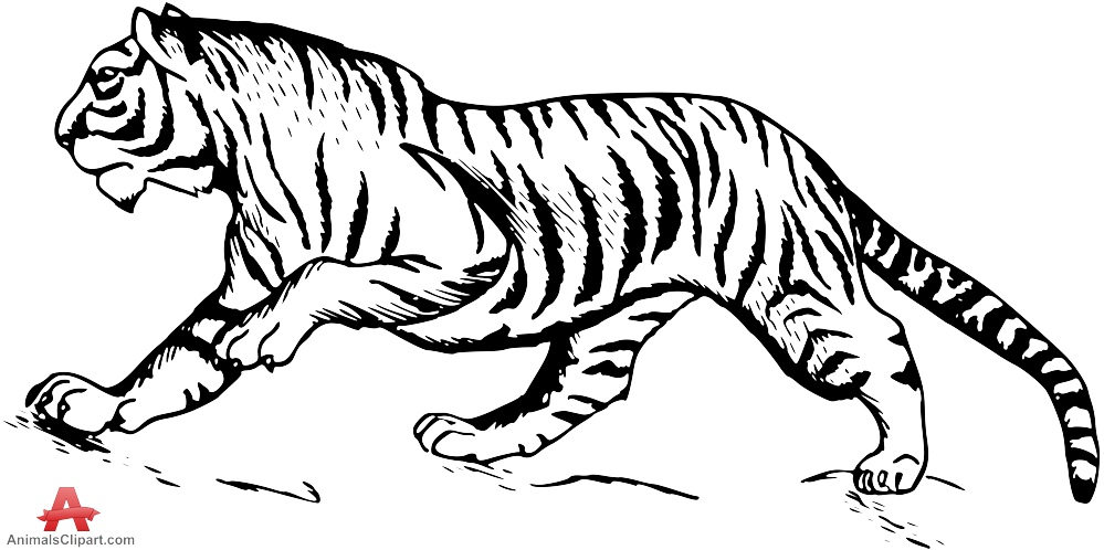 Tiiger clipart black and white #12