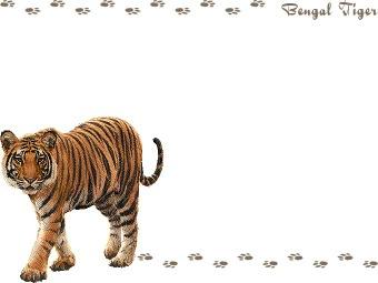 White Tiger clipart bengal tiger Royal postcard clipart graphics Tiger