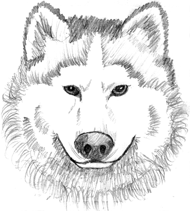 White Wolf clipart And page Free Clip and