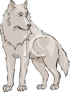 White Wolf clipart Clipart Wolf A White Clipart