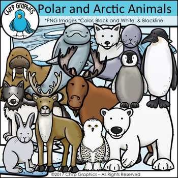 Polar Fox clipart arctic seal Polar images Polar Arctic of