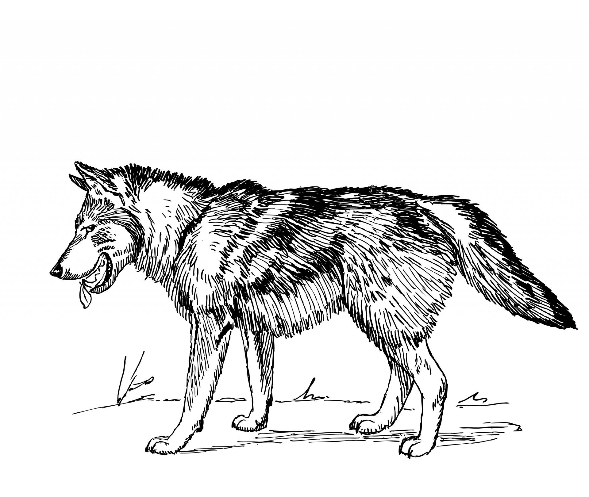 White Wolf clipart bad wolf Wolf free Free public 68