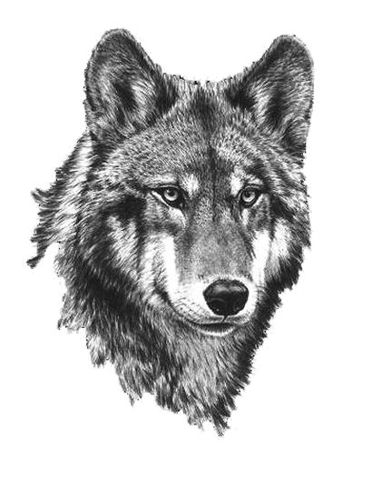 White Wolf clipart cub scout Wolf White Keywords scout Black
