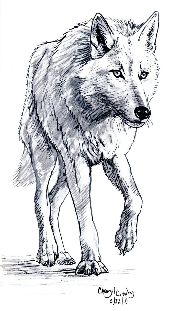 White Wolf clipart monochromatic Wolf best by Art images