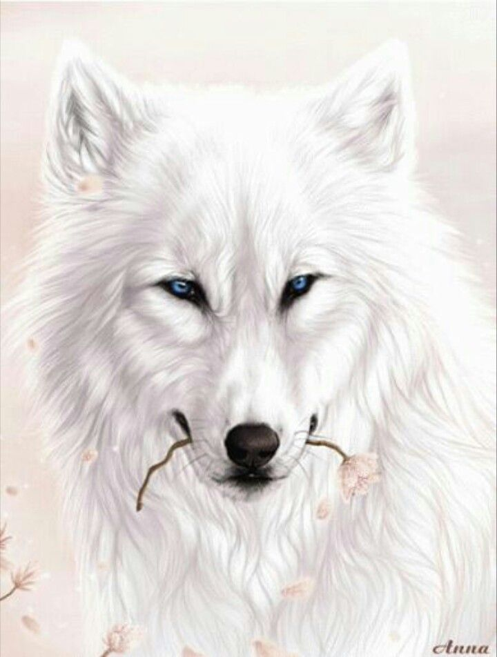 White Wolf clipart monochromatic Wolf best Pin Art images