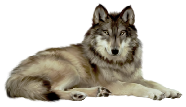 Wolf clipart transparent background Free Wolf PNG com Transparent