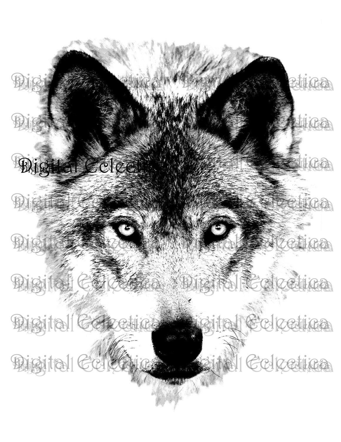 White Wolf clipart wolf face Drawing face Face wolf And