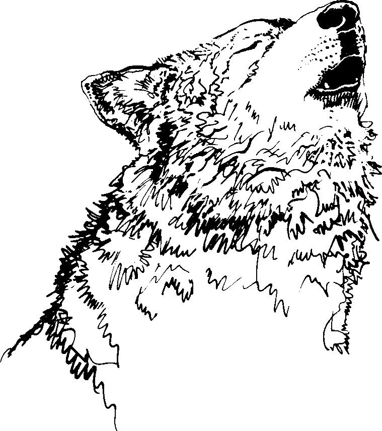 White Wolf clipart wolf howl #3