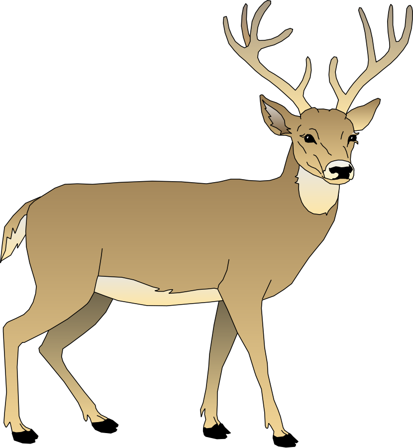 Hunting clipart whitetail deer #11