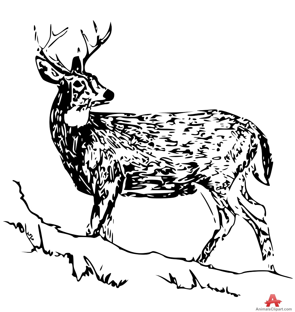 White-tailed Deer clipart White Tailed Tailed Deer Design