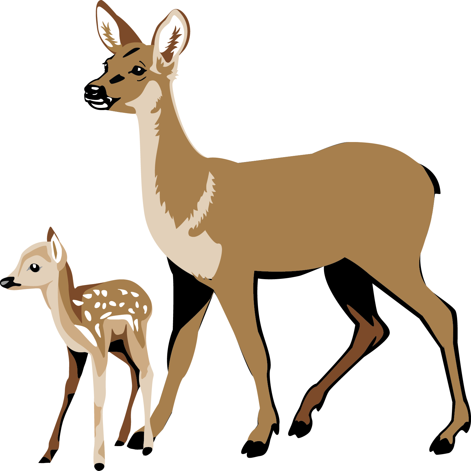 White-tailed Deer clipart Response as Gateway video Texas