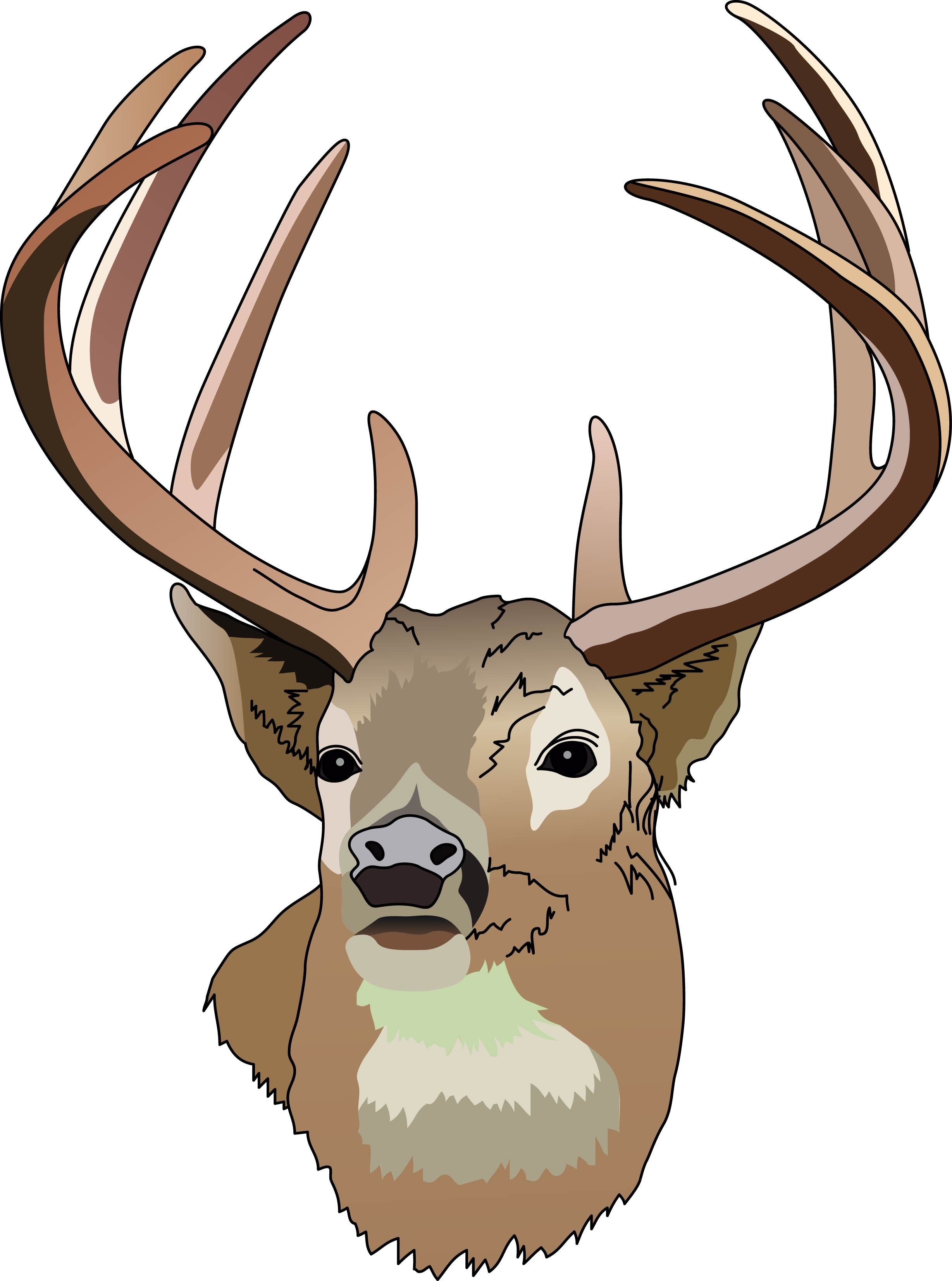 Hunting clipart deer head Free com clipart tailed deer