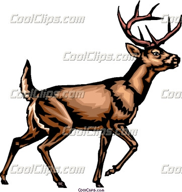 Hunting clipart whitetail deer #7