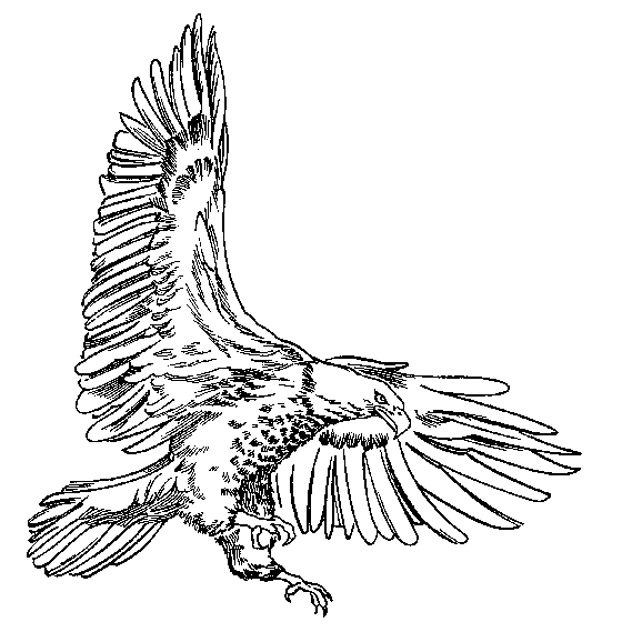 Bald Eagle clipart black and white Clipart tailed clipart Download Eagle