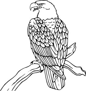 White-tailed Eagle clipart On art Pinterest Bald domain
