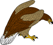 White-tailed Eagle clipart Clip White Download Eagle Art