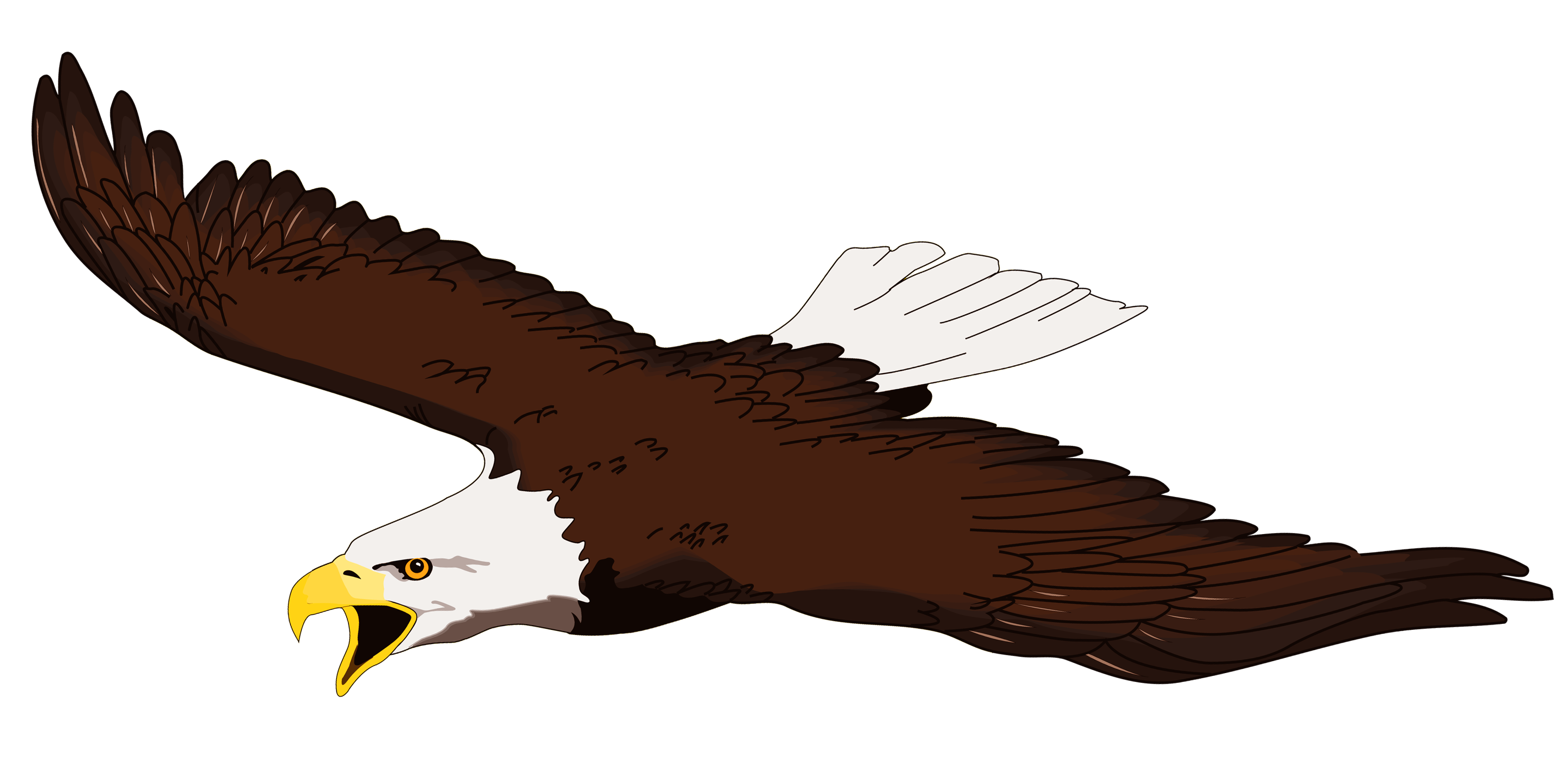 White-tailed Eagle clipart Clipart White Clip com Clipartner