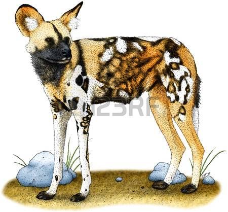 Wild Dog clipart Hyena Clipart African #6 Dog clipart African