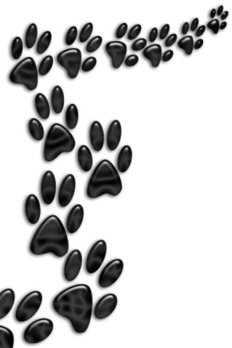 Wildcat clipart bearcats Pixels large paw Pinterest jpg