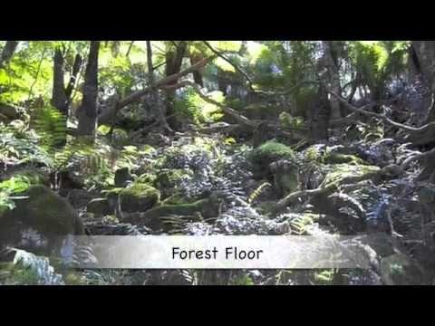 Wilderness clipart amazon rainforest On ideas 20+ Pinterest Rainforest