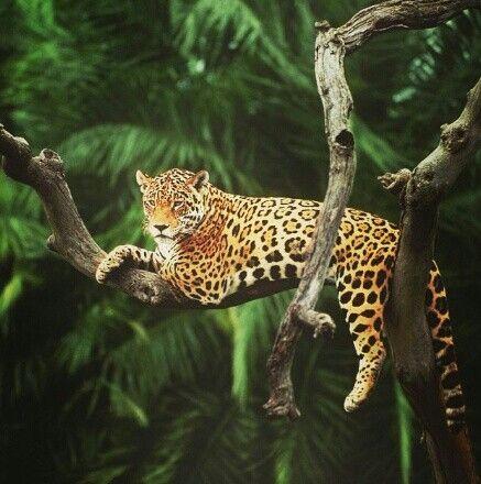 Wilderness clipart amazon rainforest Towards Best animal print Could