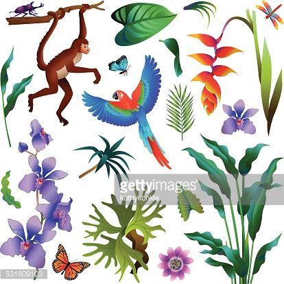 Wilderness clipart amazon rainforest Auf plants spider and animals