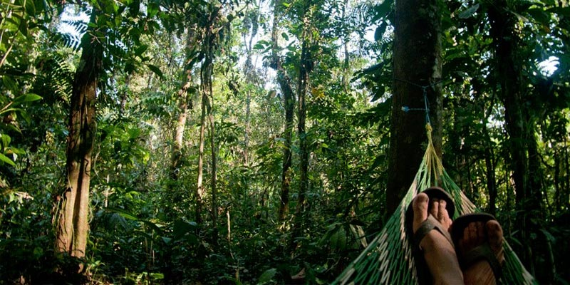Wilderness clipart amazon rainforest Rainforest with ARCAmazon Peruvian the