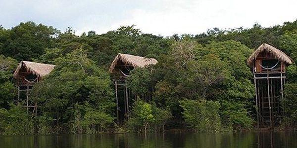 Wilderness clipart amazon rainforest Private Each Amazon units of