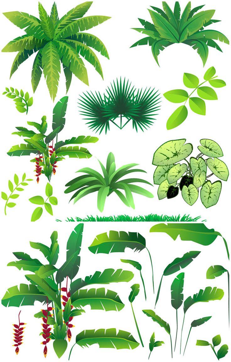 Drawn rainforest rainforest plant Ideas vector Blog Vector on