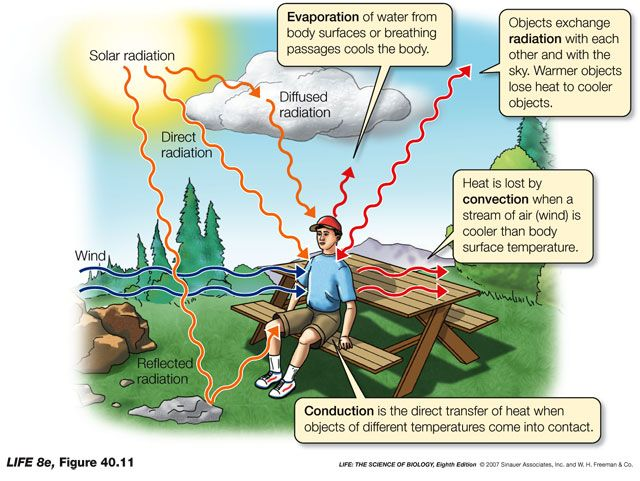 Wilderness clipart heat radiation Conduction 79 radiation convection Energy