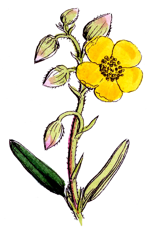 Wildflower clipart Savoronmorehead Wildflower Savoronmorehead Clipart Clipart
