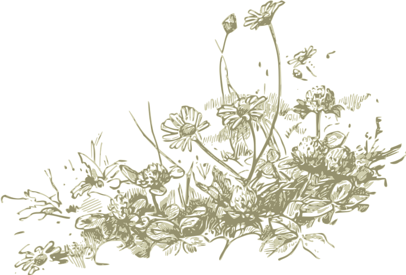 Wildflower clipart Clip Art Clip Wildflower Clipart