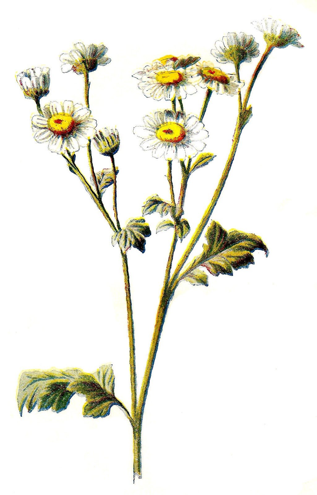 Wildflower clipart Art flower Clip Art illustration
