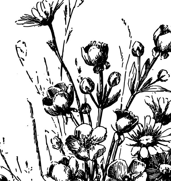 Wildflower clipart black and white For com Graphics www baby