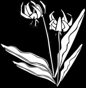 Wildflower clipart black and white Clker  clip art Wild