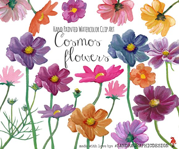 Wildflower clipart cosmos flower Flowers Illustrations on ~ Illustrations