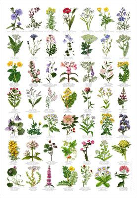 Wildflower clipart flower bucket  on Wildflower ideas tattoo