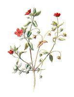 Wildflower clipart flowering plant Images: Wildflower Crafting Scrapbooking wildflower