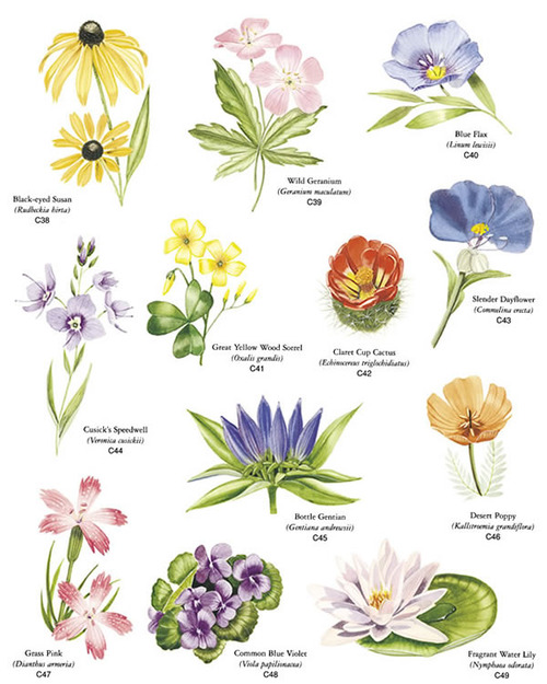 Wildflower clipart flowering plant Chart Free Pinterest Charts chart