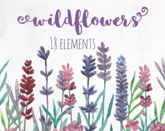 Wildflower clipart flowering plant Watercolor lavender Pink clipart Botanical